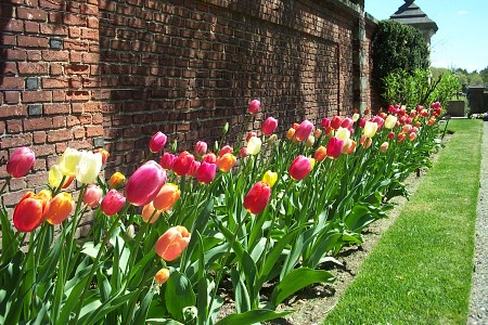 Photo by C. Murphy; Old Westbury Gardens