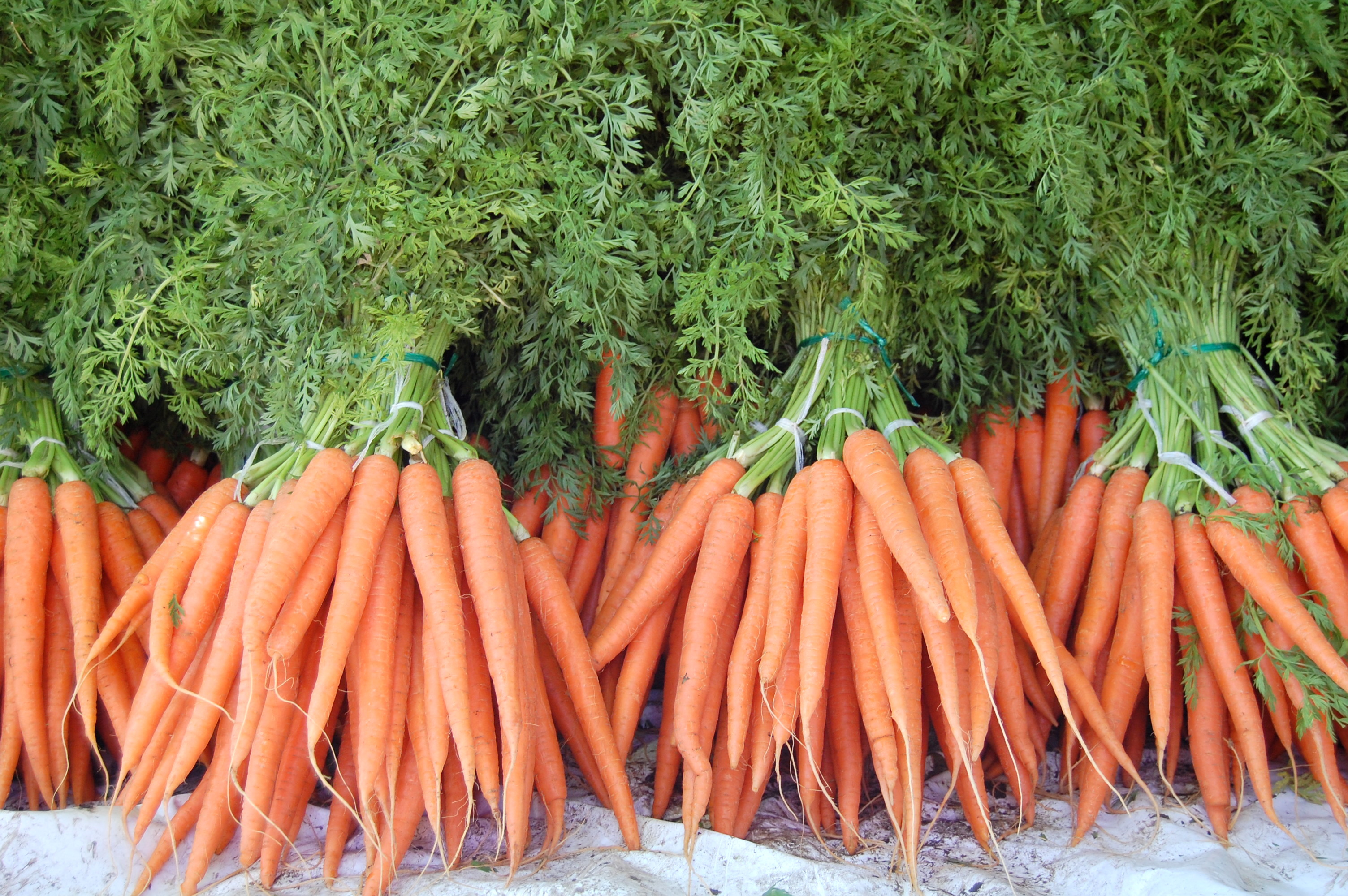 Will carrots help me see better? No. Will Chocolate? A ...